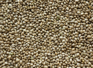 The health benefits of hemp seeds